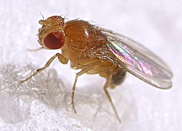 Fruitvliegjes en ander ongedierte bestrijden