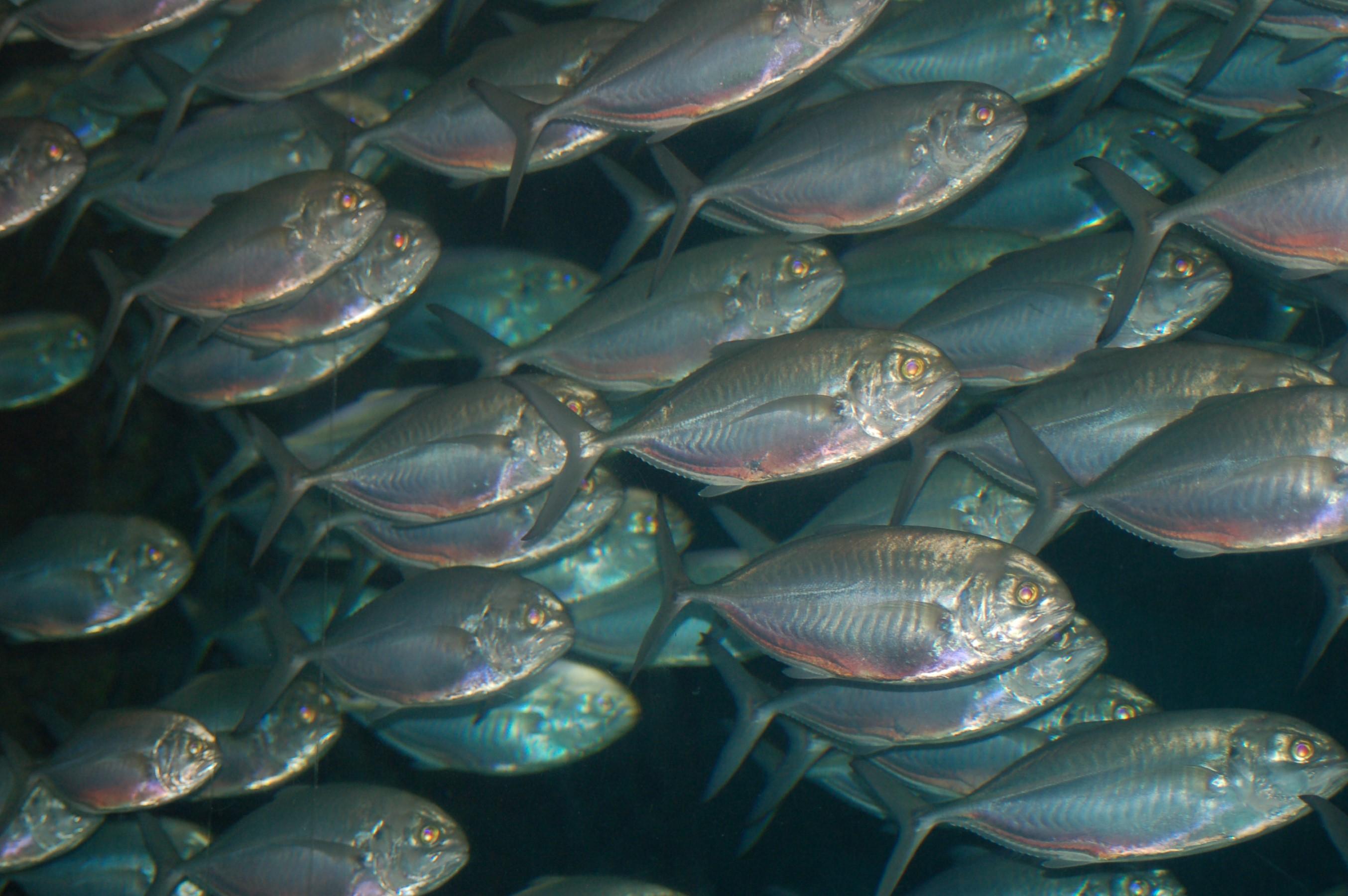 Vis ruikt naar vis door omega-3 vetzuren