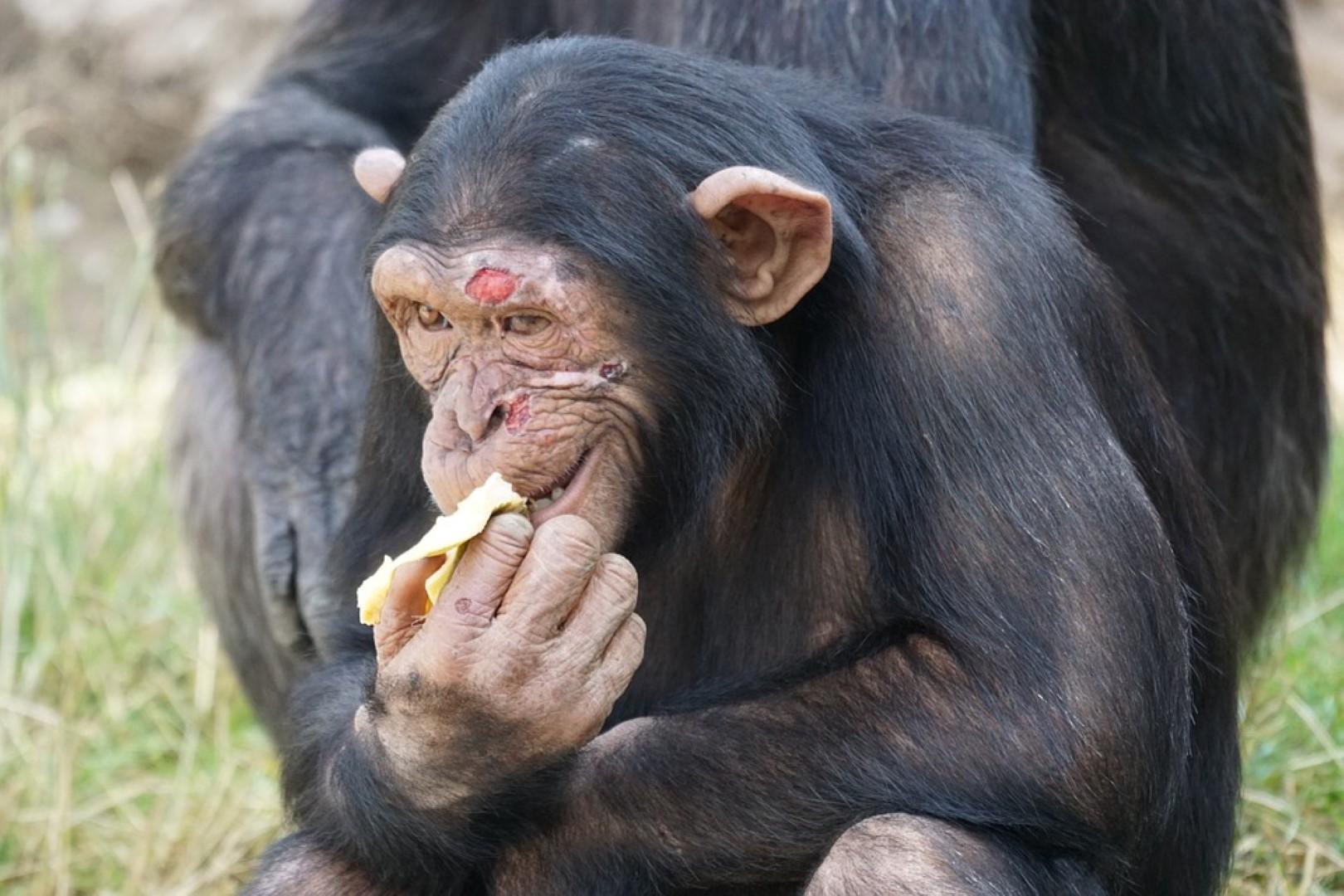 Kauwen op voedsel maakt mens tot wat hij is
